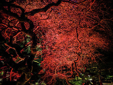 Michael Bessler - Red Japanese maple at night