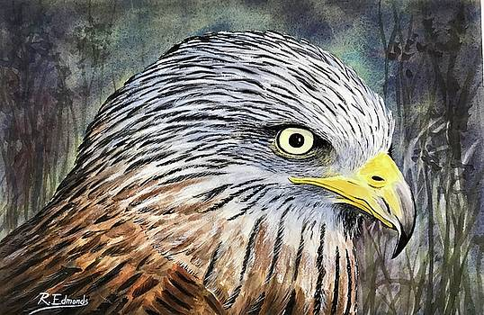 Red Kite by Raymond Edmonds