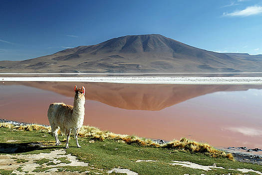 Red Lagoon Bolivia by Kurt Williams