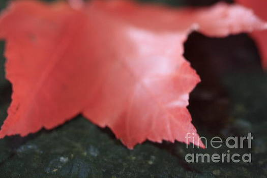 Red Leaf by Arelys Jimenez