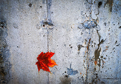Red Leaf by Donna Lee