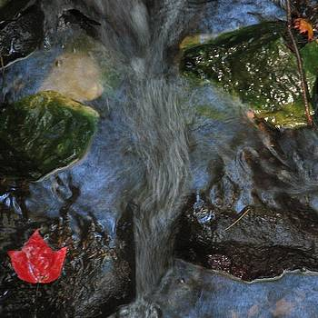 Red Leaf in Brook by Laurianne Nash