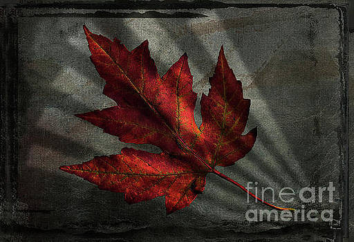 Red leaf, window light by Jim Wright