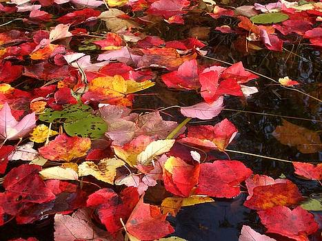 Red leaves by Alexandra Brown