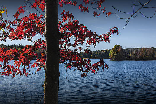 Randall Nyhof - Red Leaves and Tree Trunk in Autumn
