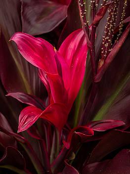 James Woody - Red Leaves