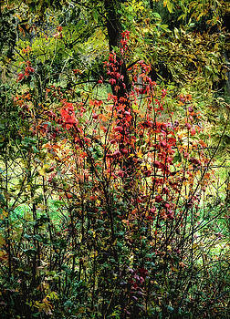 Red Leaves by John Brink