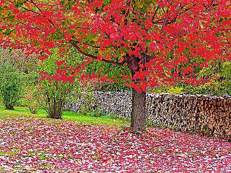 Red Leaves by Mansour Zadrafie