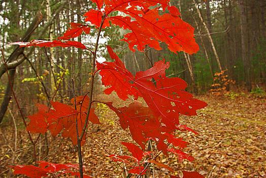 Autumn by Zalman Latzkovich