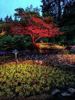 Red lite Japanese maple at dusk by Michael Bessler