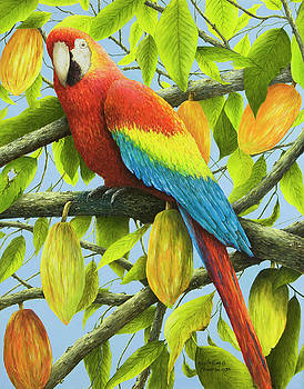 Red Macaw Parrot in Cacao Tree by Mary Ann King