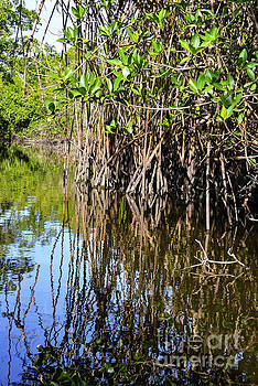 Bob Phillips - Red Mangrove Roots Reflections in the Gordon River