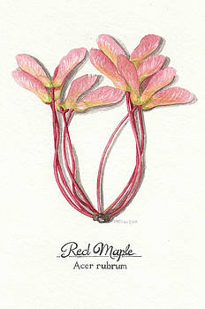 Red Maple Seeds by Rowena Finn