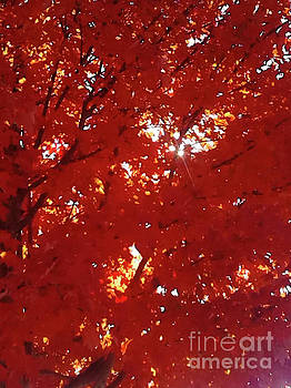 Red Maple Tree by Gardening Perfection
