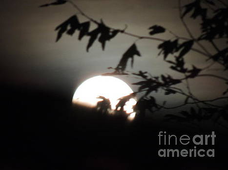 Red Moon 2018 by Robert Ball