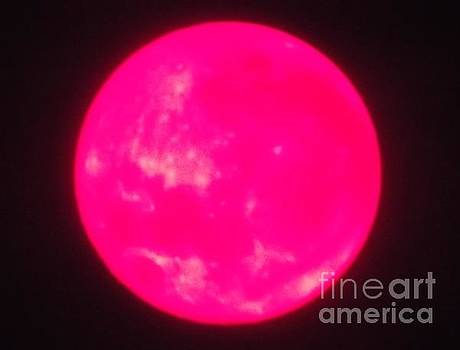 Pink Moon by John Williams