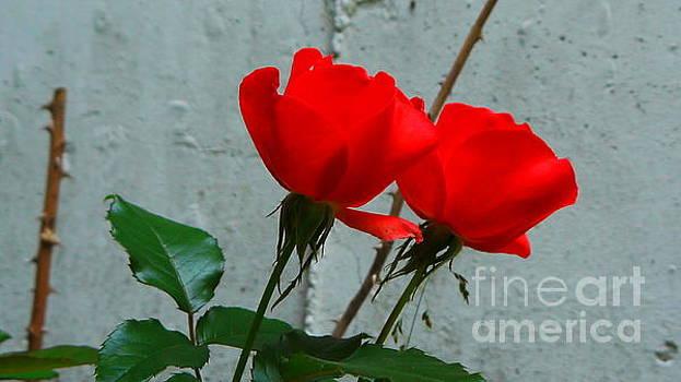 Red by Nancie DeMellia