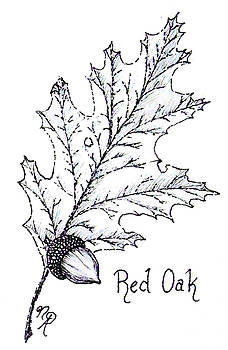 Red Oak leaf and acorn by Nicole Angell