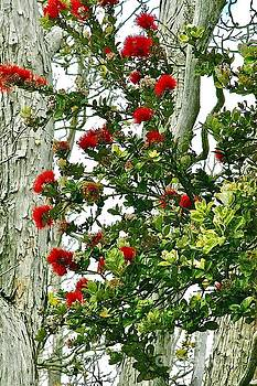 Red Ohia Lehua in Volcano Rainforest by Lehua Pekelo-Stearns