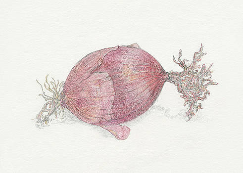 Red Onion by Tara Poole