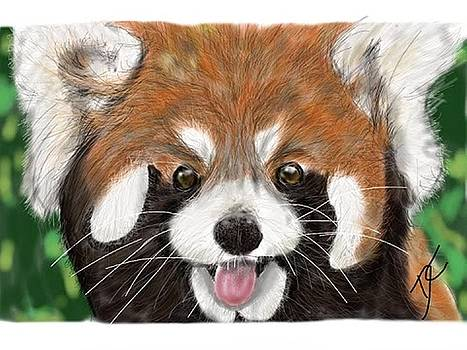 Red Panda by Darren Cannell