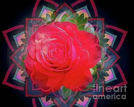 Red Parnell Rose by Clive Littin