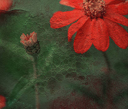 Red Passion... by Juliana Nan