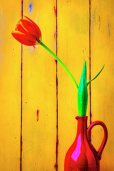 Red Pitcher With Orange Tulip by Garry Gay