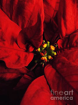 Robyn King - Red Poinsettia Floral Art
