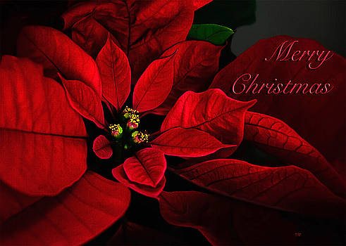 Lois Bryan - Red Poinsettia Merry Christmas Card