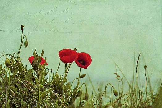 Red Poppies by Dirk Wuestenhagen