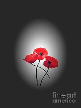 Red Poppies by Lynn Bolt