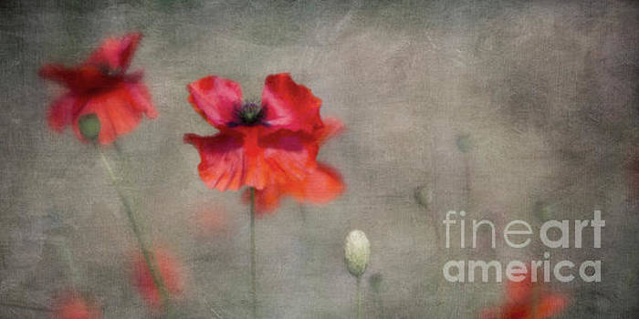 Red Poppies by Priska Wettstein