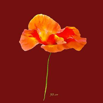 Bamalam Photography - Red Poppy