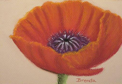 Red Poppy by Brenda Maas
