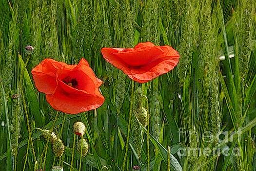 Red Poppy Flowers In Grassland 2 by Jean Bernard Roussilhe