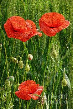 Red Poppy Flowers In Grassland 4 by Jean Bernard Roussilhe