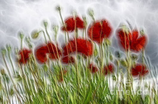 Red poppy fractal by Steev Stamford