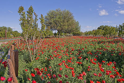 Red Poppy Garden by Bonnie Barry