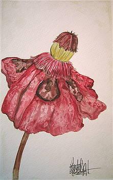 Red Poppy by K Hoover