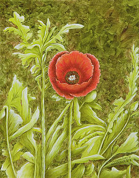 Red Poppy by Mary Ann King