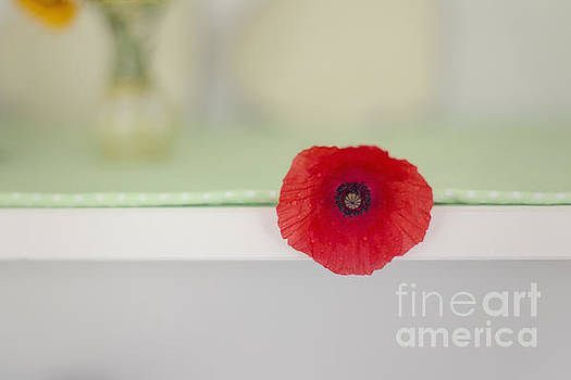 Red Poppy on Windowsill by Susan Gary
