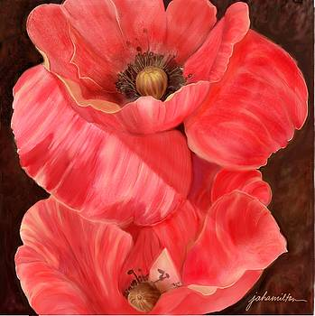 Red Poppy One by Joan A Hamilton