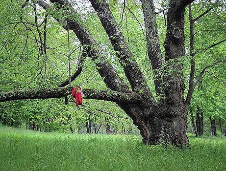 Red Raincoat and Tree by Mary Lee Dereske