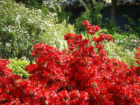 Baslee Troutman - Red Rhododendrons Gardens Rhodies Flowers art