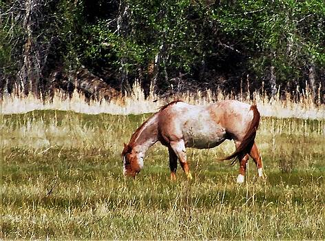 Red Roan by Larry Campbell