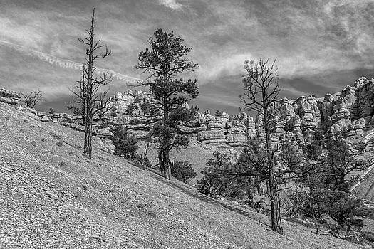 Red Rock Canyon BW by Mitch Johanson
