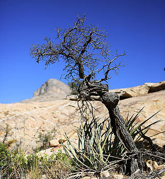 Red Rock Canyon NV 10 by Chris Brannen