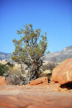 Red Rock Canyon NV 3 by Chris Brannen