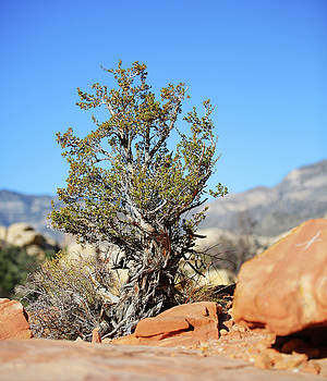 Red Rock Canyon NV 4 by Chris Brannen